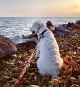 Kutya Fahéj ősszel